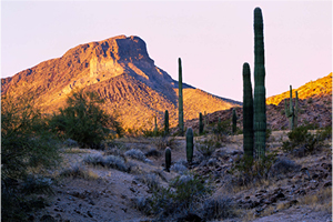 Sunset image of a desert mountain with Saguaro cactus