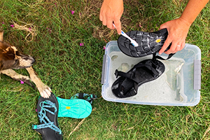A person scrubbing the bottom of Chaco sandals with a toothbrush while a dog looks on