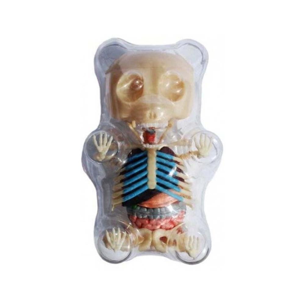 4d Master Gummi Bear Mini Anatomy Model